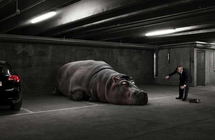 Ленивый зверь в гараже