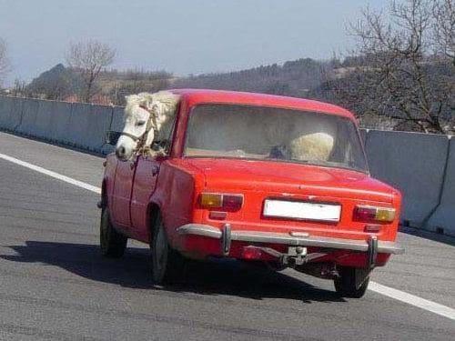 Органы и пони: что перевозят в машинах российские водители