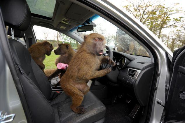 Volkswagen monkey